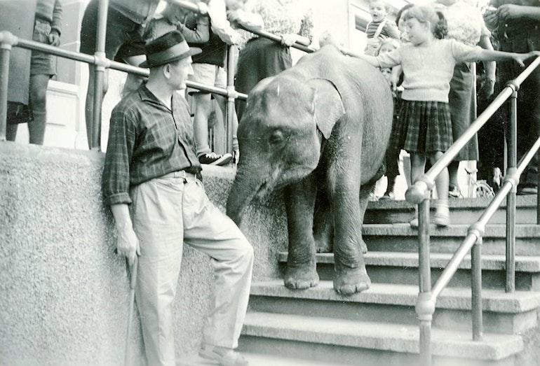 Ma Palaj, le jeune éléphant des Knie