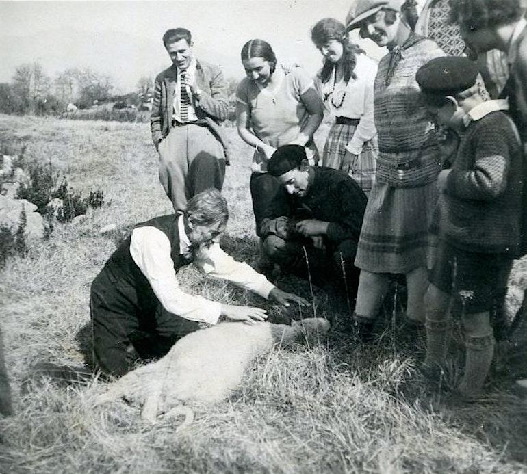 Hypnose d'un mouton