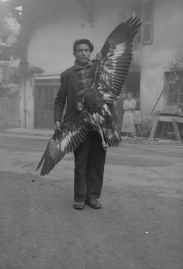 Aigle tué au Salève - vers 1935 Collonges-sous-Salève